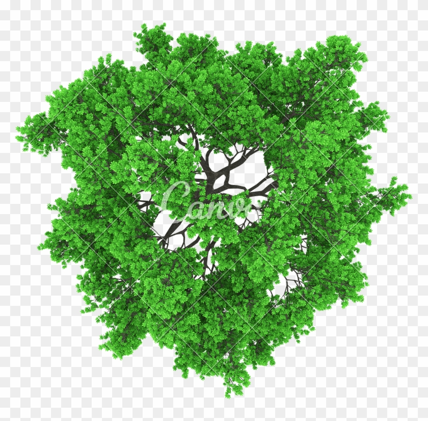 800 X 800 21 - Tree Top View Vector Png Clipart #1745906
