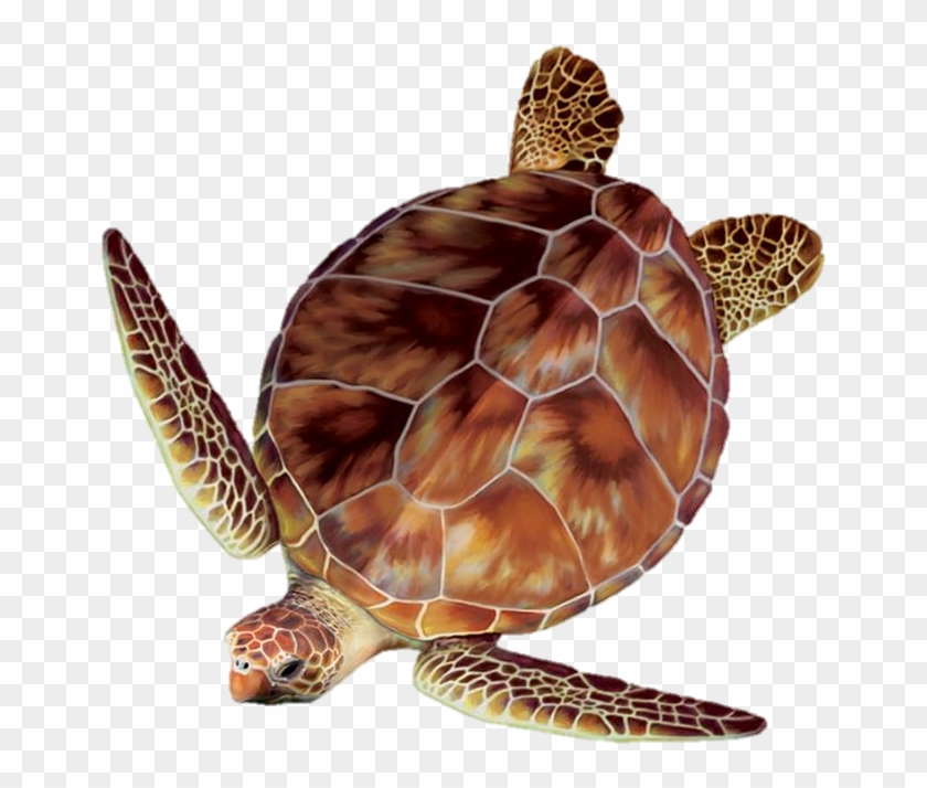Sea Turtle Clipart Turtle Egg - Sea Turtle Top View - Png Download #1780074