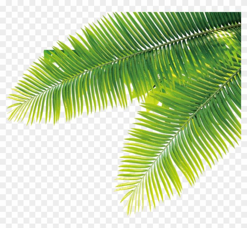 Tropical Plants Army Skin Iphone 6/6s - Custodia In Pelle Rosa