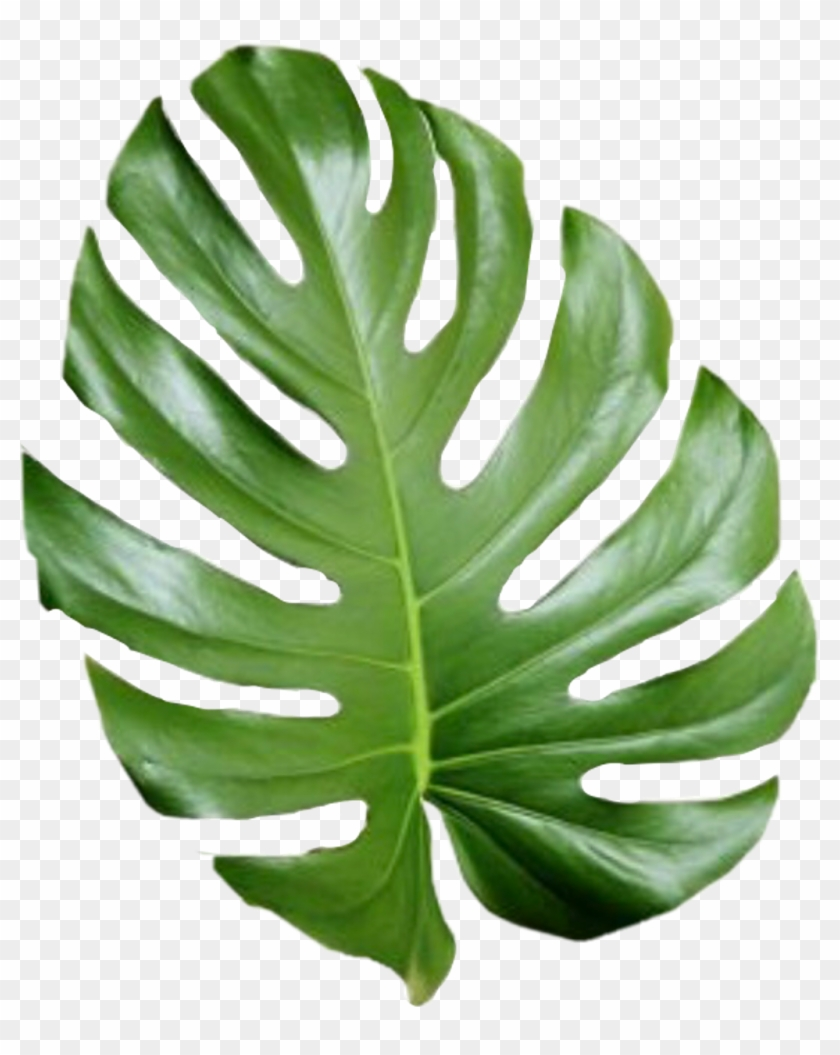 Tropical Leaf Palmtree Palmleaf Aesthetic Tumblr Cute Aesthetic Palm Leaves Png Clipart 185944 Pikpng