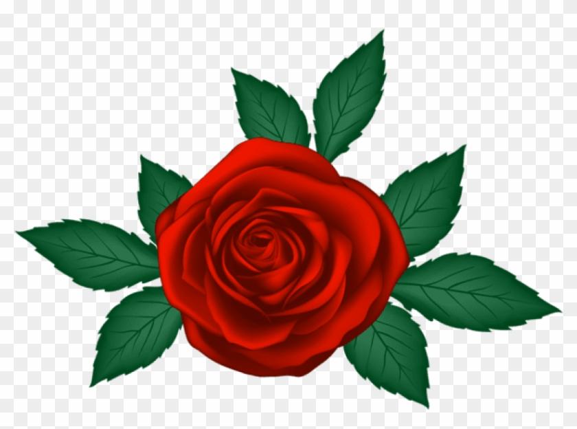 Free Png Download Red Rose Transparent Png Images Background Png