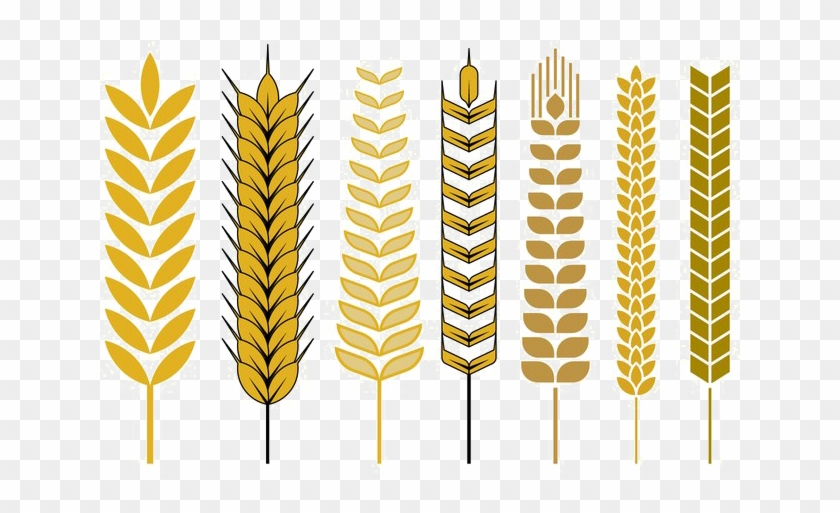 Wheat Vector Free Png - Wheat Stalk Vector Png Clipart #1818410