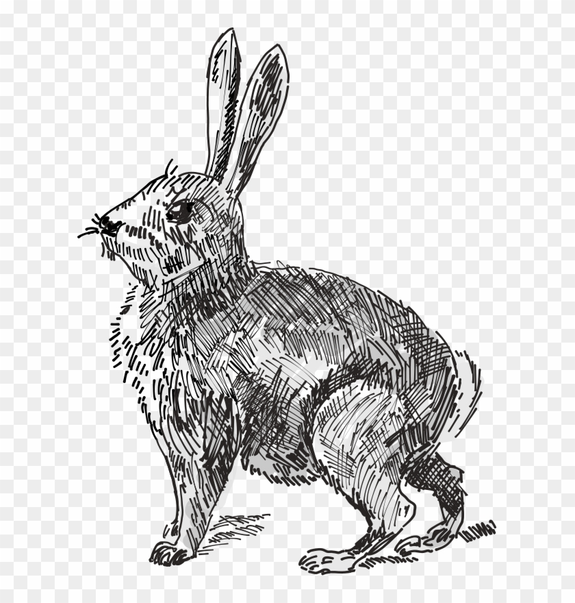 White Rabbit European Rabbit Hare Drawing - Black And White Rabbit Png, Transparent Png #1964912