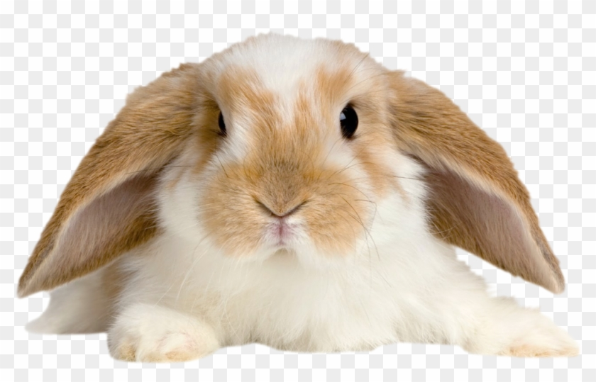 Cute Rabbit Png Clipart #1964984