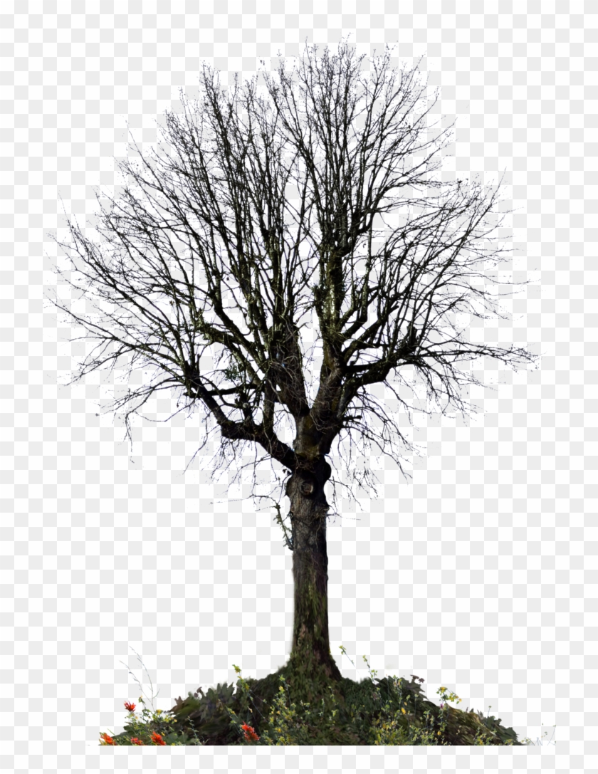 Winter Tree Png - Trees For Photoshop Winter Clipart #1998022