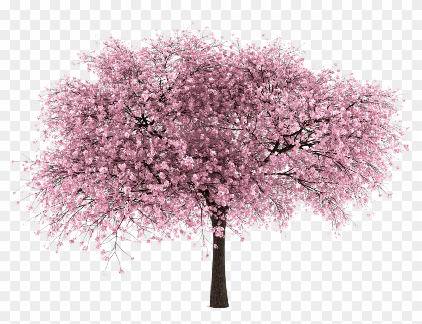 Sakura Clipart Pretty Tree - Cherry Blossom Tree Png Transparent Png #20645