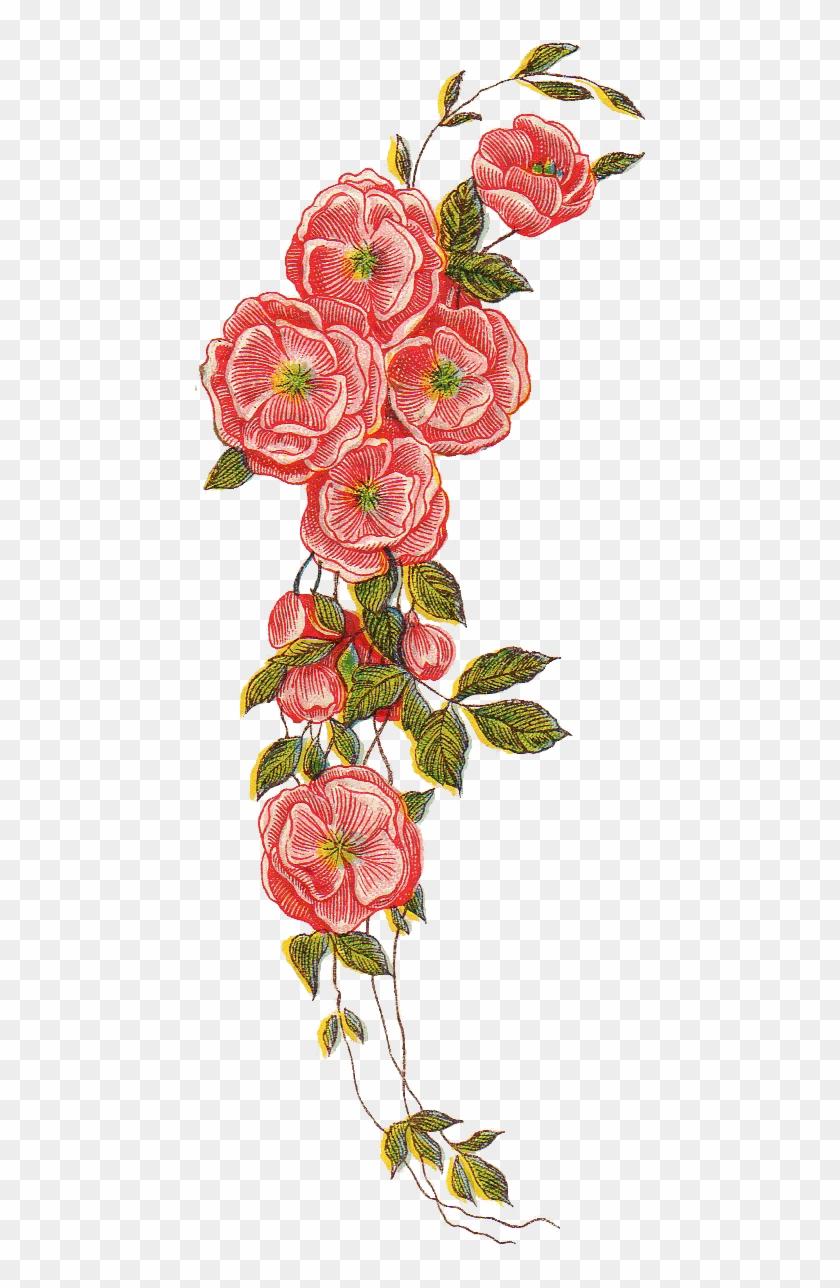 Displaying 16 Gallery Images For Red Rose Border Png - Floral Vintage Design Png Clipart #22049