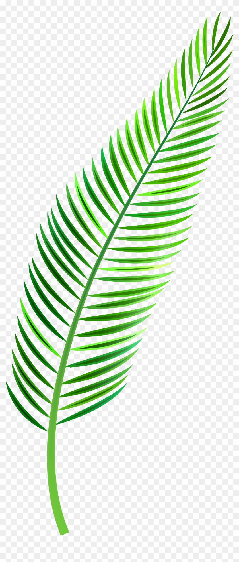 Palm Leaf Png Clip Art - Palm Leaf Clipart Png Transparent Png #28305