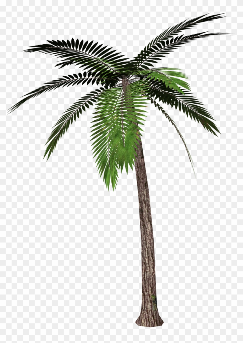 Tree Palm Trees Download Free Image - Palm Tree Transparent Background Clipart #28979