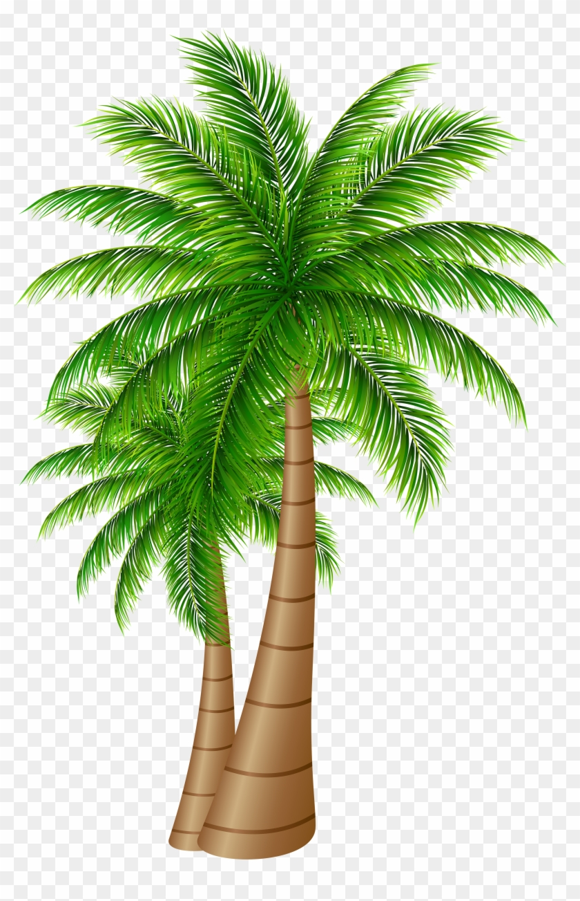 Free Png Download Palm Trees Large Png Images Background - Date Palm Tree Png Clipart #29230