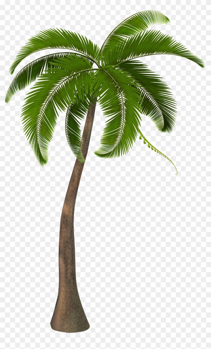 Beautiful Arecaceae Palm Tree Free Frame Clipart - Transparent Coconut Tree Png #29838