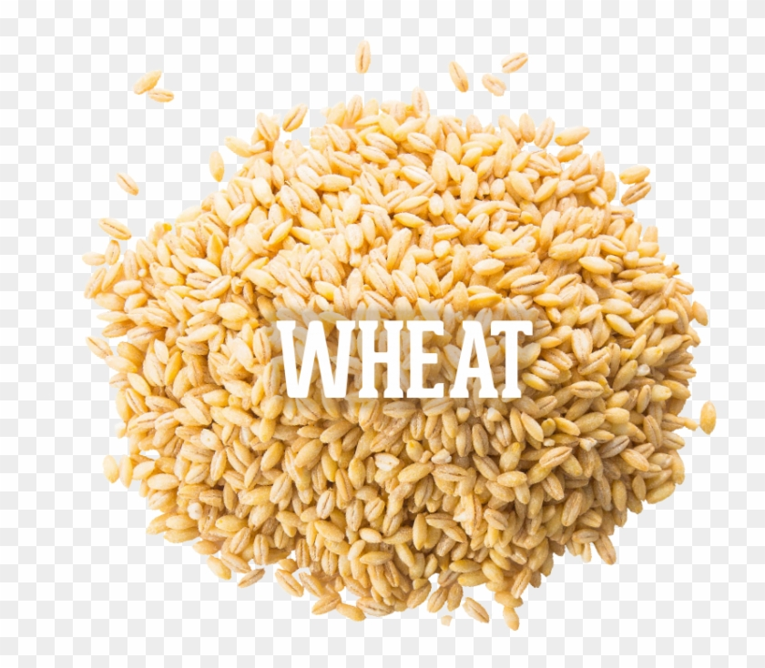 Wheat 04 Oct 2016 , Png Download - Whole Grain Clipart #2072547