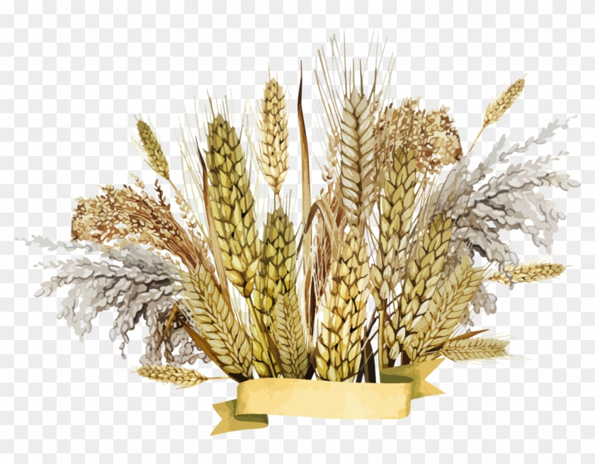Wheat Png, Download Png Image With Transparent Background, - Millet Hd Png Clipart #2072899