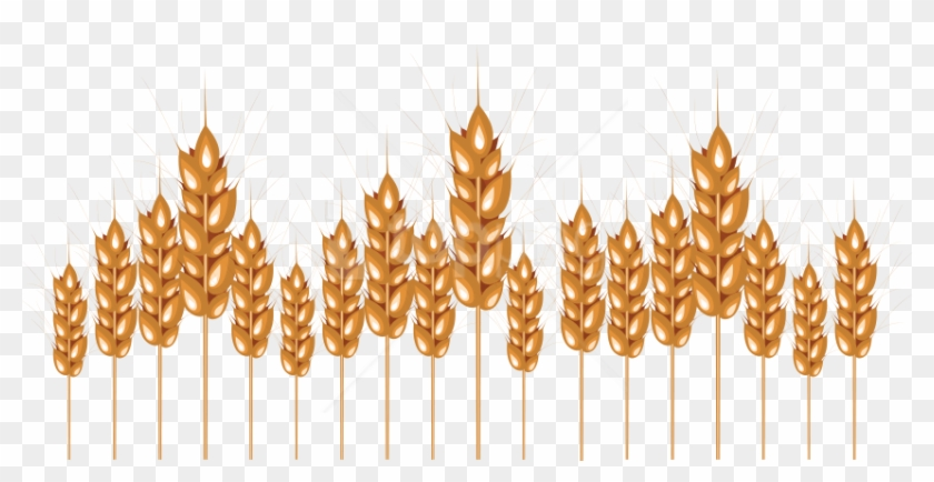 Free Png Download Wheat Png Images Background Png Images - Illustration Clipart #2073255