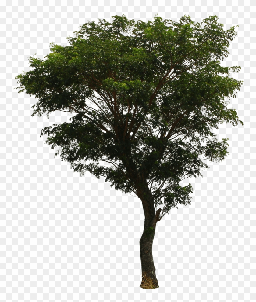 Photoshop Pine Trees Transparent - Tree Png Clipart #2091748