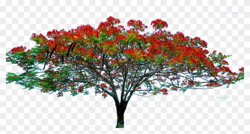 Free Png Spring Tree Png Png Image With Transparent - Tree Image Hd Png Clipart #2095245