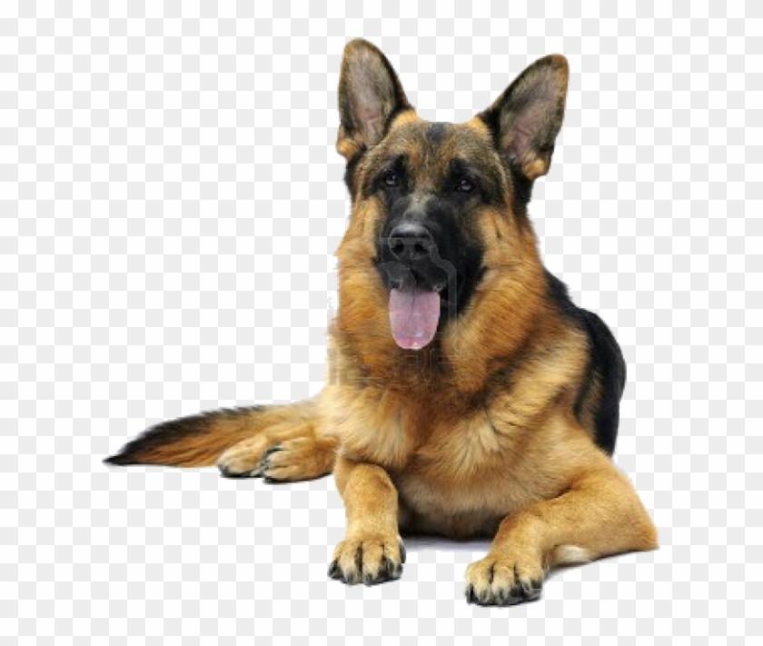 Image Dog, German, Deutsch, German Language - Cute Dog German Shepherd Clipart #216817