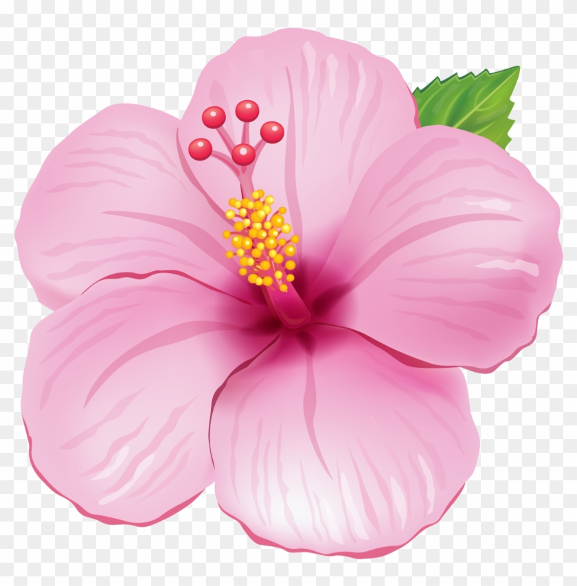 Pink Exotic Flower Png Clipart Picture Flores Tropicais Png