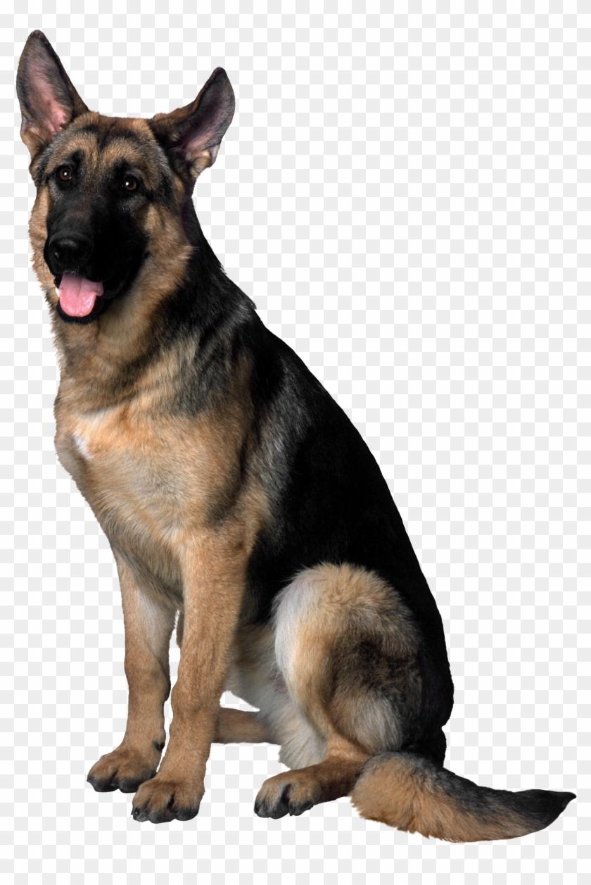 German Shepherd Dog Png Clipart #216988