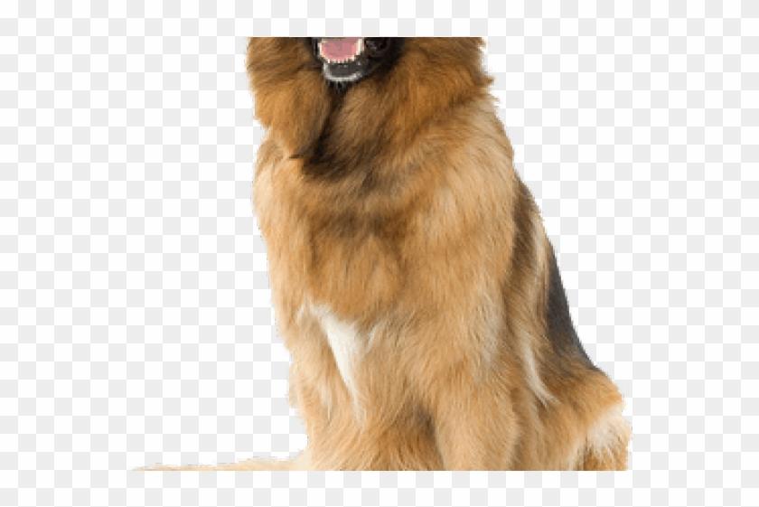 German Shepherd Clipart Transparent Background - Dog Png Background #217066
