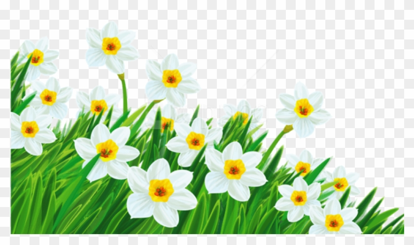 Free Png Download Transparent Grass With Daffodils - Spring Flowers Transparent Background Clipart #2108977