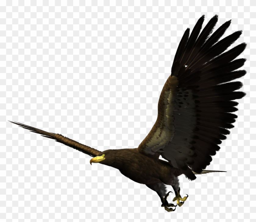Bald Eagle Bird Flight - Eagle Flying Png Clipart #2134306