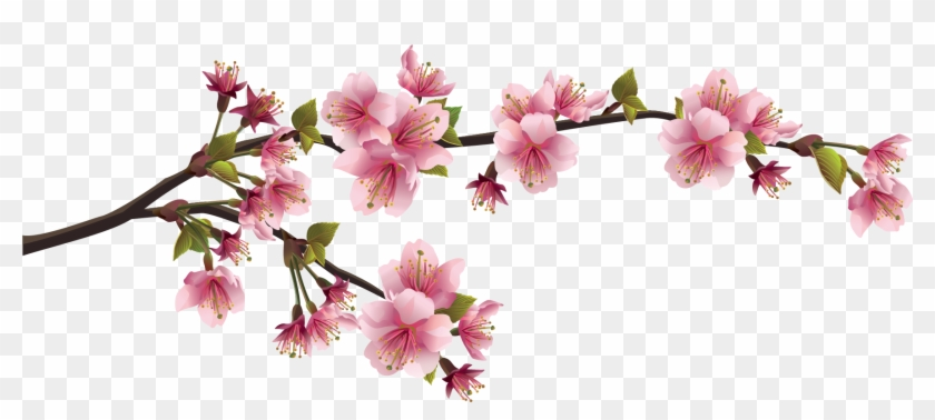 Vector Bunga Sakura Png, Transparent Png #2138628