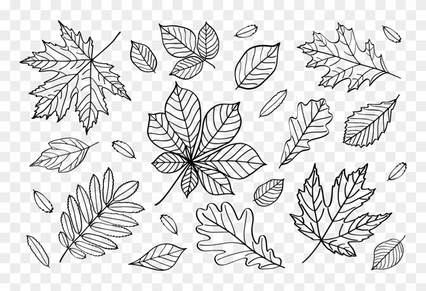 Medium Image - Fall Leaves Outline Clipart - Png Download #2152419