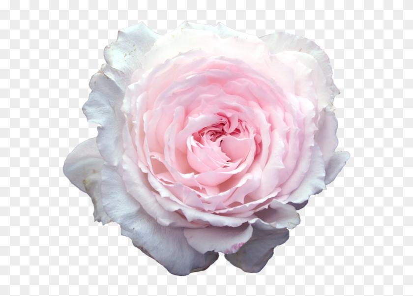 Meh Light Pink Flowers, Transparent Flowers, Overlays - Transparent Stickers Tumblr Flower Clipart #2153635