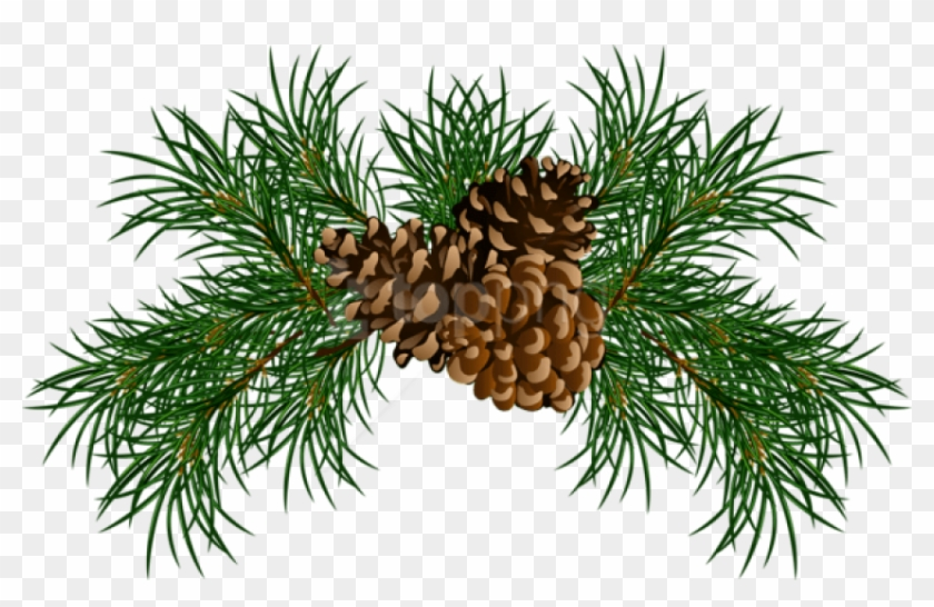 Free Png Pine Branches With Pine Cones Png Images Transparent - Pine Needle Clip Art #2157694