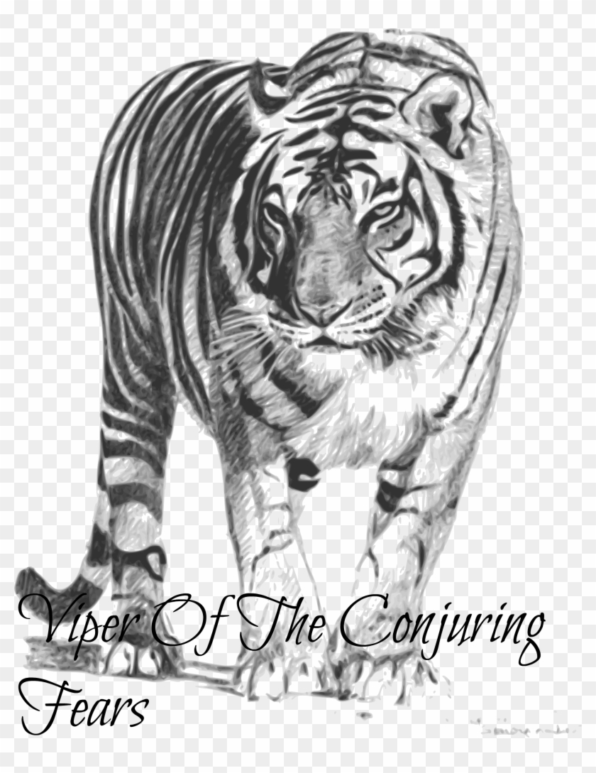 White Tiger Png Transparent Images - Bengal Tiger Black And White Clipart@pikpng.com