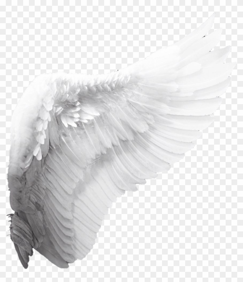 Wings Sticker - White Angel Wings Png Clipart #231926