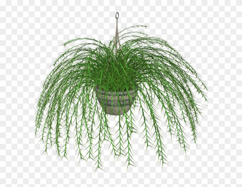 Hanging Ivy Png - Hanging Plant With Transparent Background Clipart #2341148