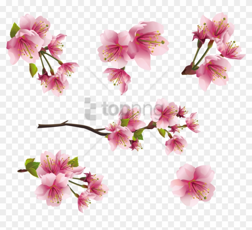 Flower Spring Pink Png Clipart #2377949