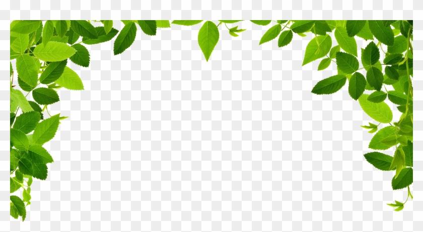 Jungle Vines Png - Leaves Border Clipart Png Transparent Png #2381162