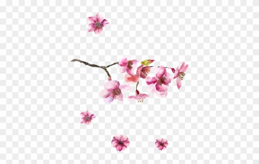 Drawn Cherry Blossom Petal - Cherry Blossom Japan Drawing Clipart #242802