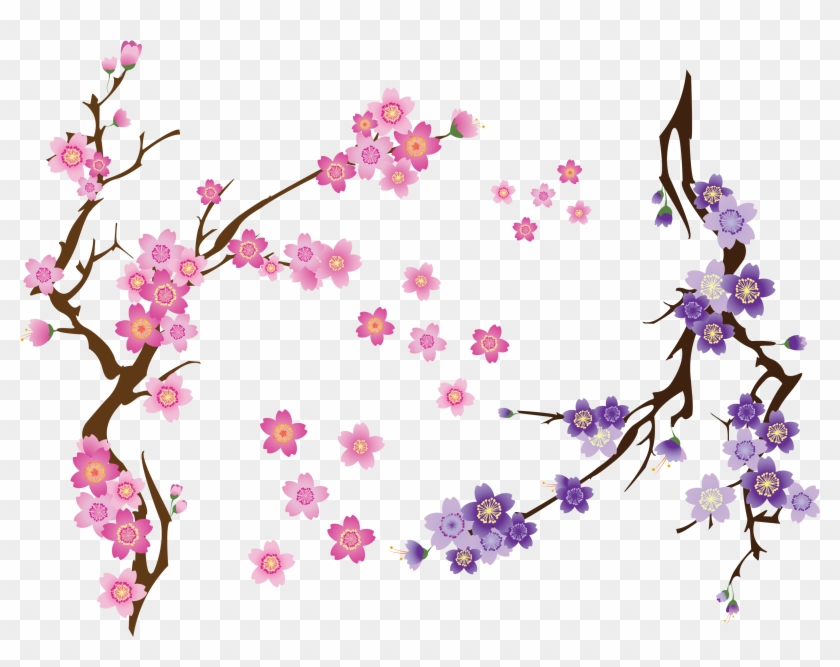 Cherry Blossom Drawing Clip Art - Png Download #243531