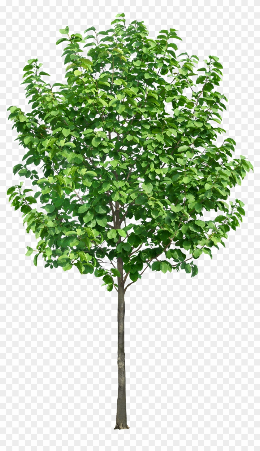 Pin By Ar - Trees In Section Png Clipart #2409030