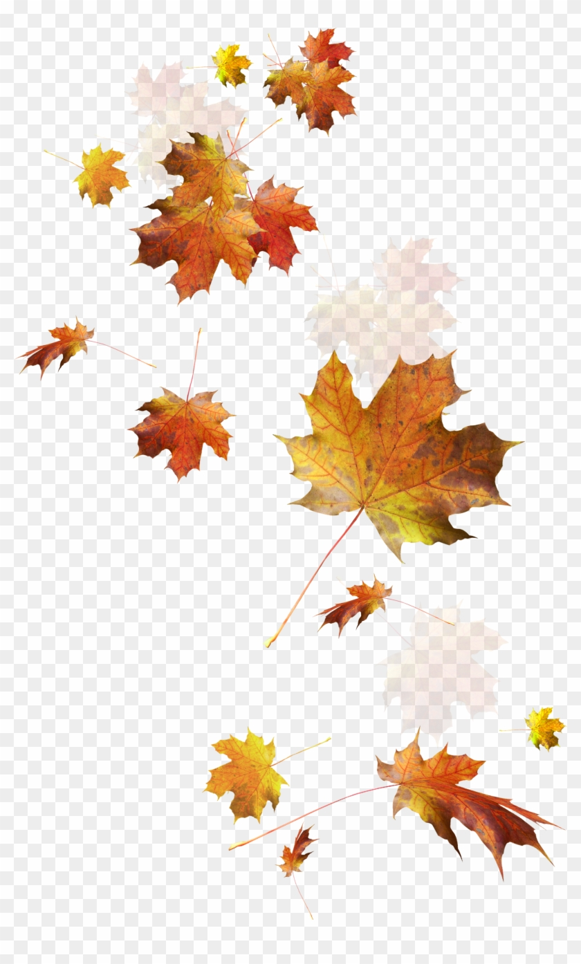 Autumn Color Leaves Leaf Falling Download Hd Png Clipart - Falling Autumn Leaves Png Transparent Png #2416520
