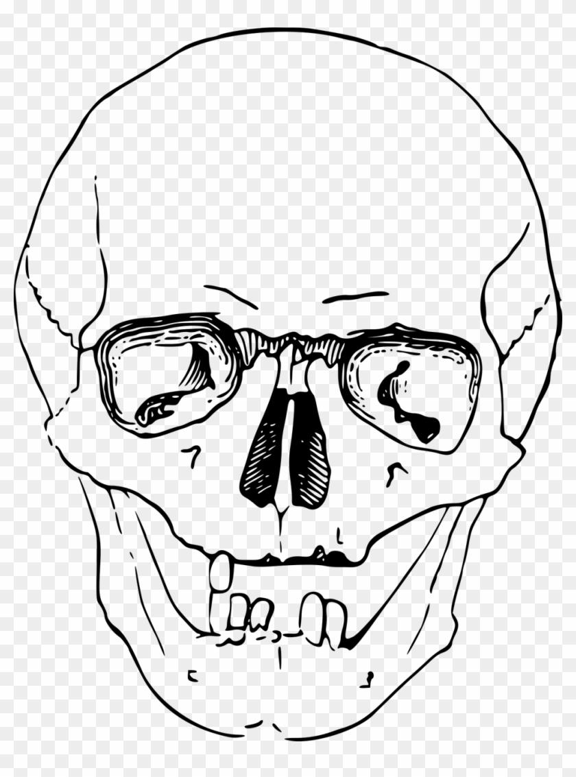 Bone Dead Head Skeleton Skull Image Sketsa Gambar