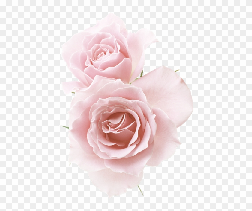 Rose☆ Red Flowers, Pink Roses, Flower Png Images, Pastel - Light Pink Flowers Png Clipart #2435457