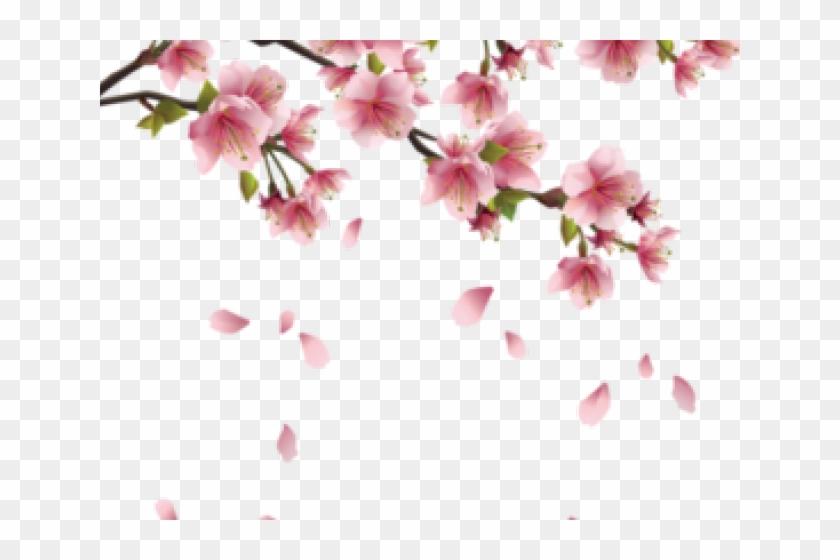 Drawn Cherry Blossom Pastel - Bunga Sakura Vector Png Clipart #2453034