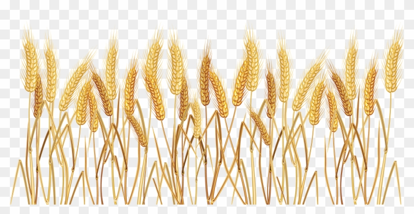 Wheat Border Clipart - Wheat Clip Art - Png Download #2492974