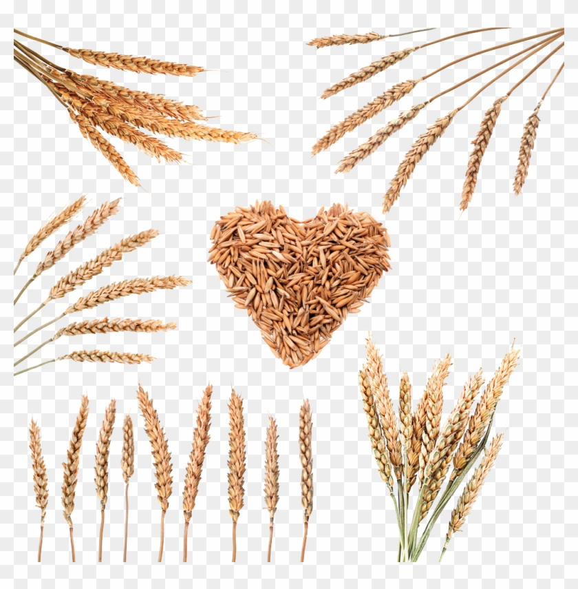 Rice Download Cereal Wheat Grain Image Transprent - Png Rice Grain Clipart #2493168