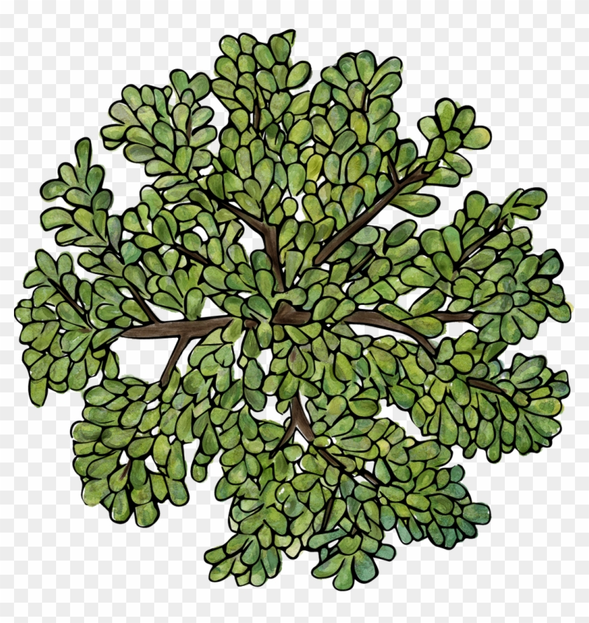 1070 X 1082 5 - Png Top View Tree Clipart #253876