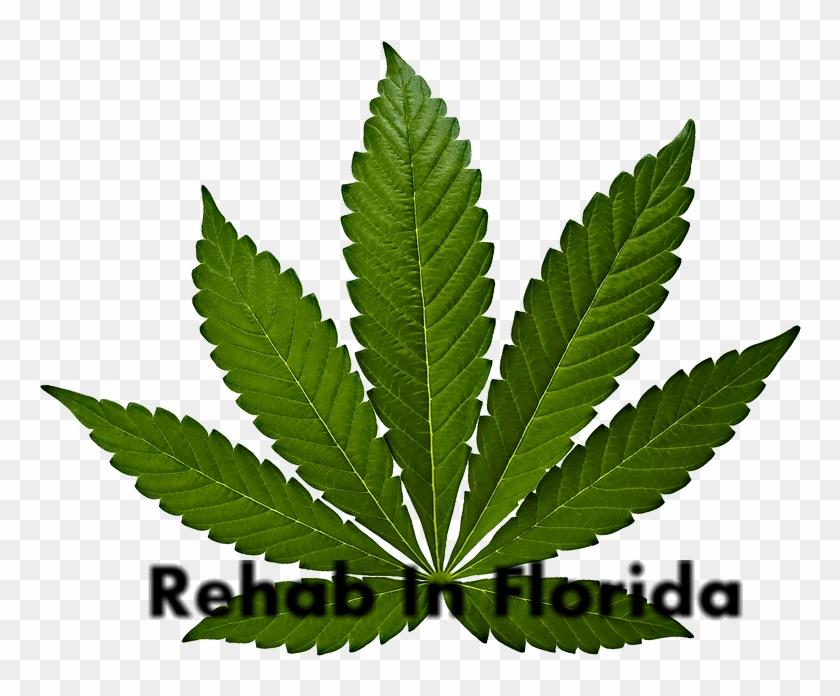Rehab For Marijuana Abuse - Cannabis Leaf Clipart #255581