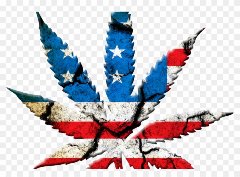 Bank Rejects Candidate's Money Because Of Medical Marijuana - Marijuana Leaf Usa Clipart #255653