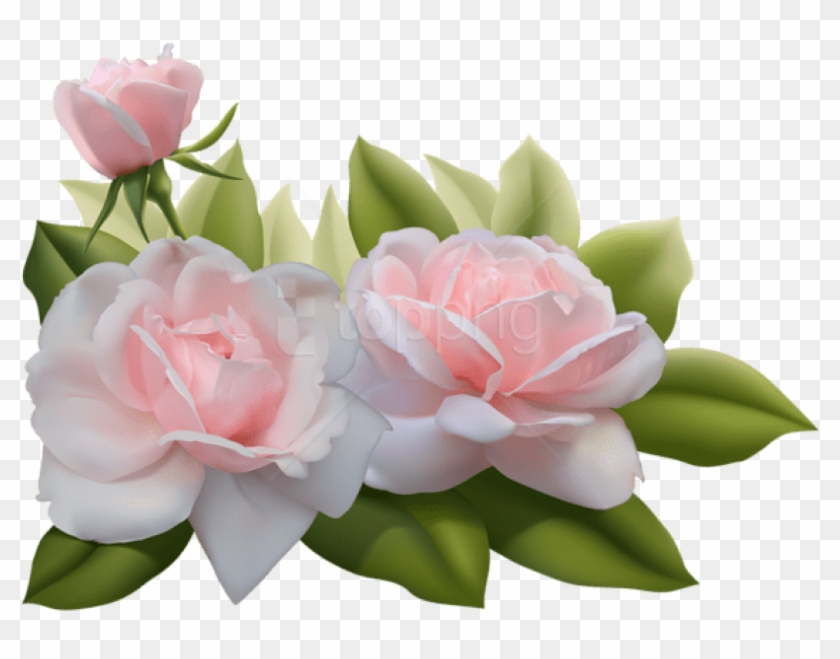 Free Png Beautiful Three Pink Roses Png Images Transparent - Png Three Pink Roses Clipart #2517325