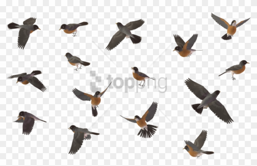 Free Png Sparrow Bird Png Image With Transparent Background - Flying Robin Bird Png Clipart #2521002