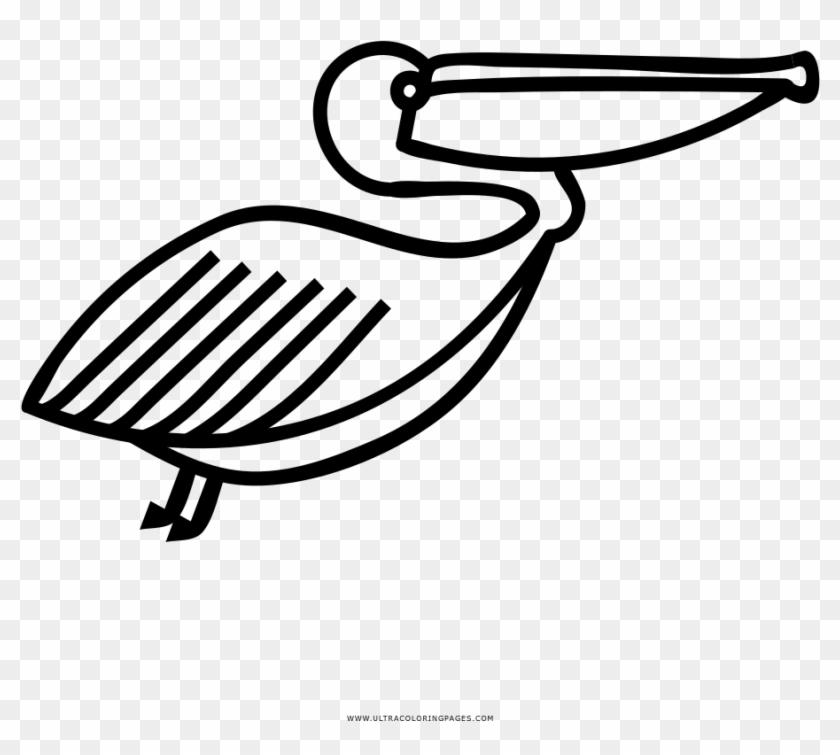 Realistic Pelican | Super Coloring | Pelican art, Pelican drawing ... | 755x840